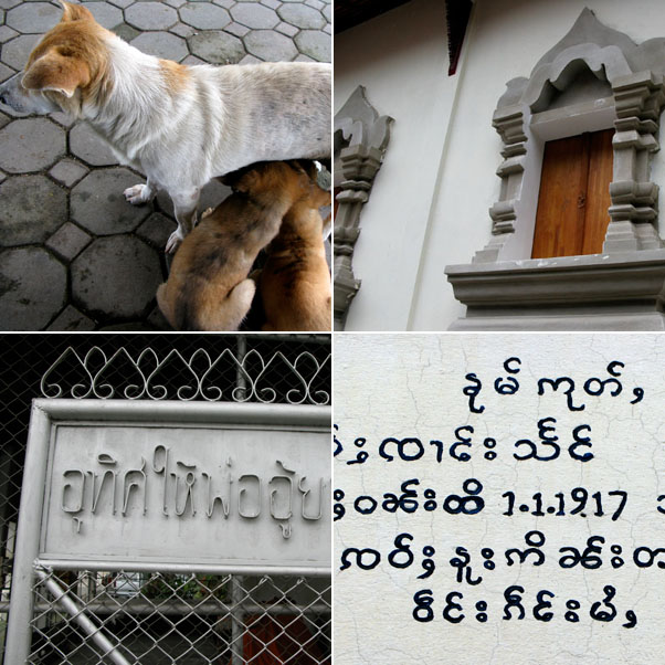 Nursing pups, Temple windows at Wat Chang Taem, Temple Gate, Handwritten headstone at Wat Pa Pao