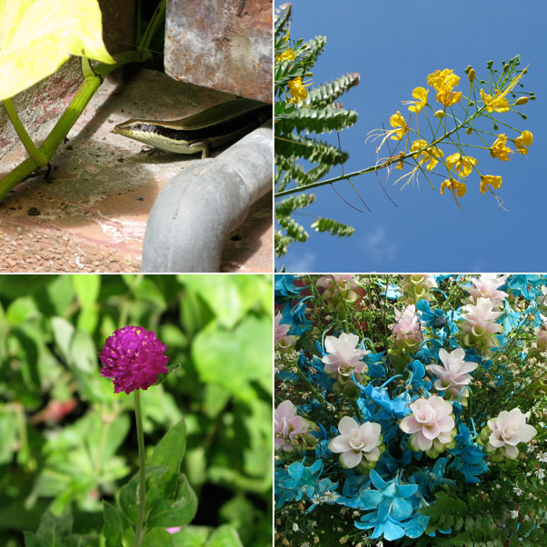 Nature in the Built Environment...Lizards roam freely, Ornamental Blooms, Beautiful Weeds, A bouquet with Blue Orchids