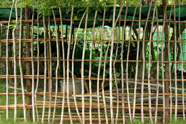 Wat Jet Yot: Bamboo screen to greenhouse
