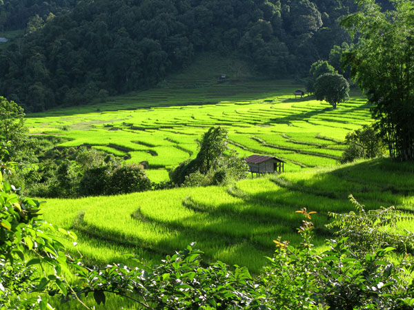 The Shot: Rice Fields at Sunset