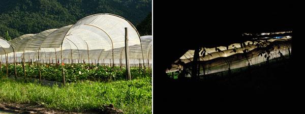 Flower Farm: Day | Night