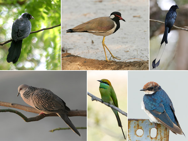 Bird Watching at Mae Hia Agricultural College