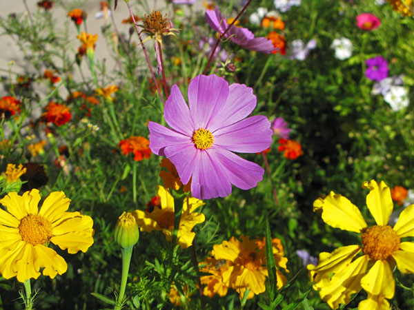 Fresh mountain flowers have been planted throughout Leh giving the town.  They contrast sharply with the whitewashed earthen buildings making it feel like you're walking through a painting!!