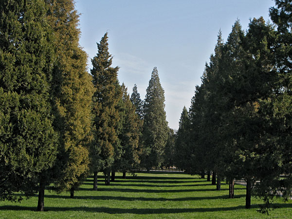 Evergreen Grid
