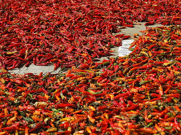 ...red peppers drying in the sun...