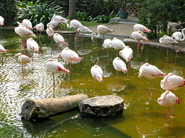 Flamingos in the Park