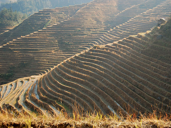 and hiked along the rice terraces in Longji,