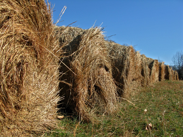 Hay bails at the farm next door.