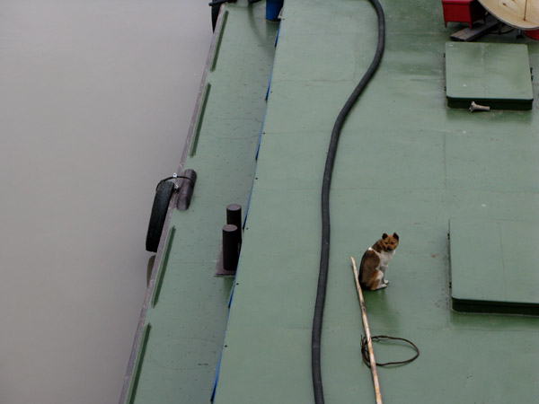 This pup knows that barges are the only way to get away.