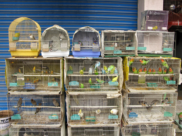 how to sell birds to pet shops