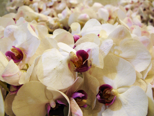 They sell orchids...