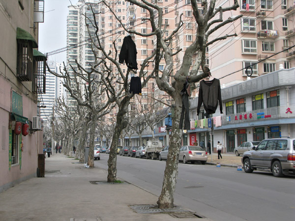 Shirts in Trees