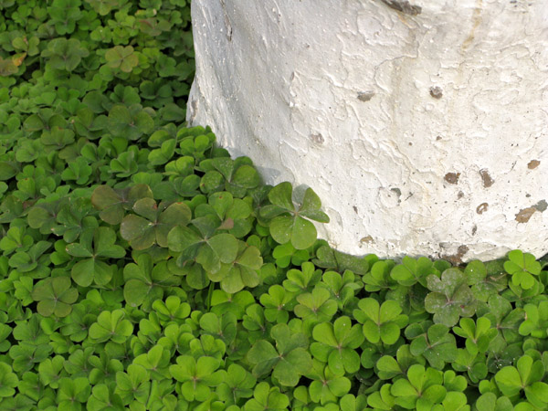 Something about these clovers was great. So green.