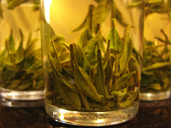 Drinking freshly picked Green Tea