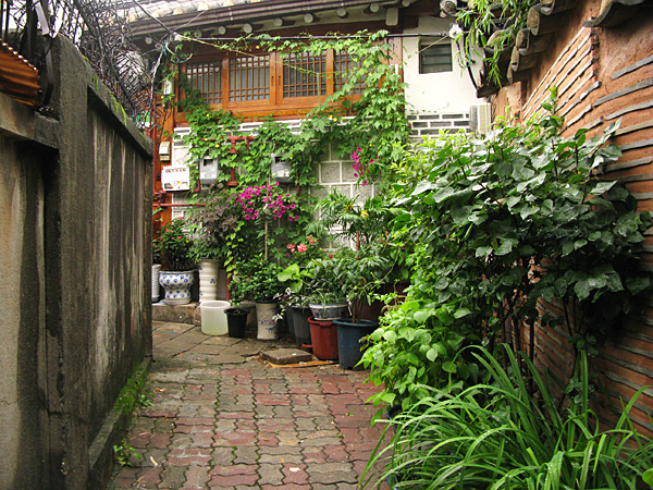 Lane filled with potted plants
