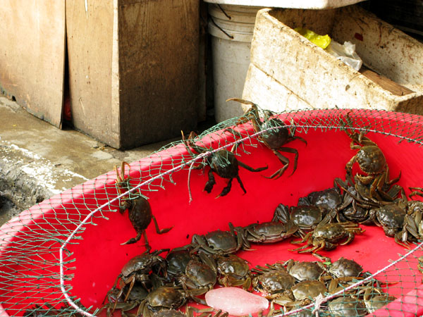 Crabs trying to escape