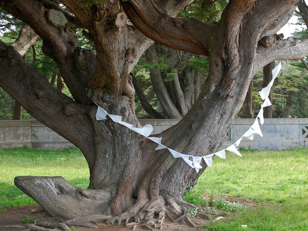 White Prayer Flag on Tree