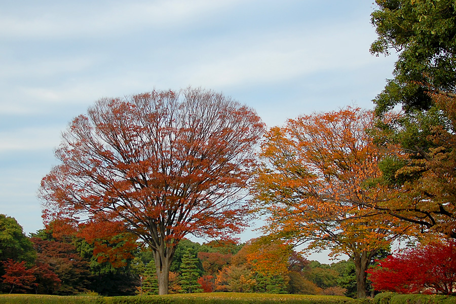 Fall colors in the Imperial Garden