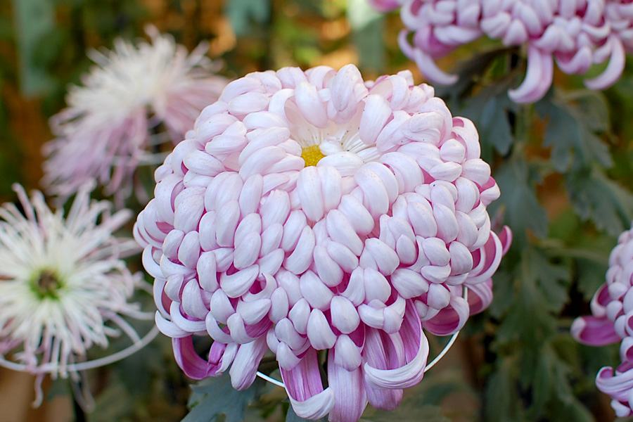 Prize Flower