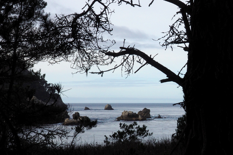 20141215_Point-Lobos_1412_011