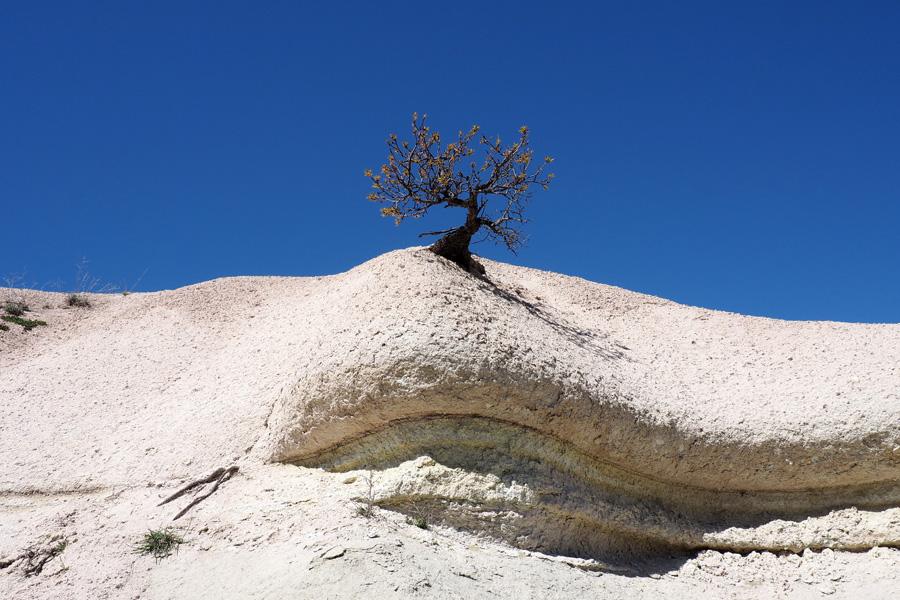 Small tree, big rock