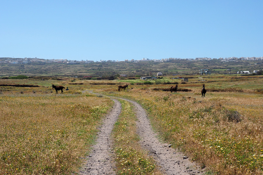Donkey Paths