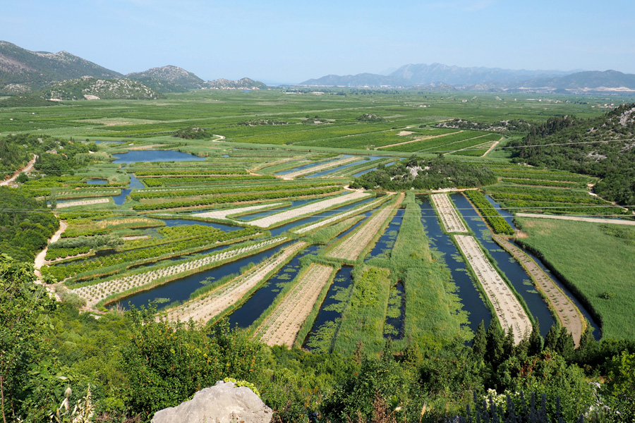 Agriculture of the Neretva River Delta