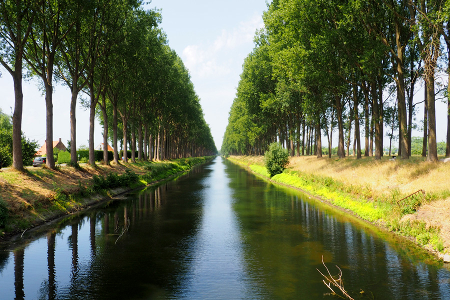 Tree Tunnel with Canal