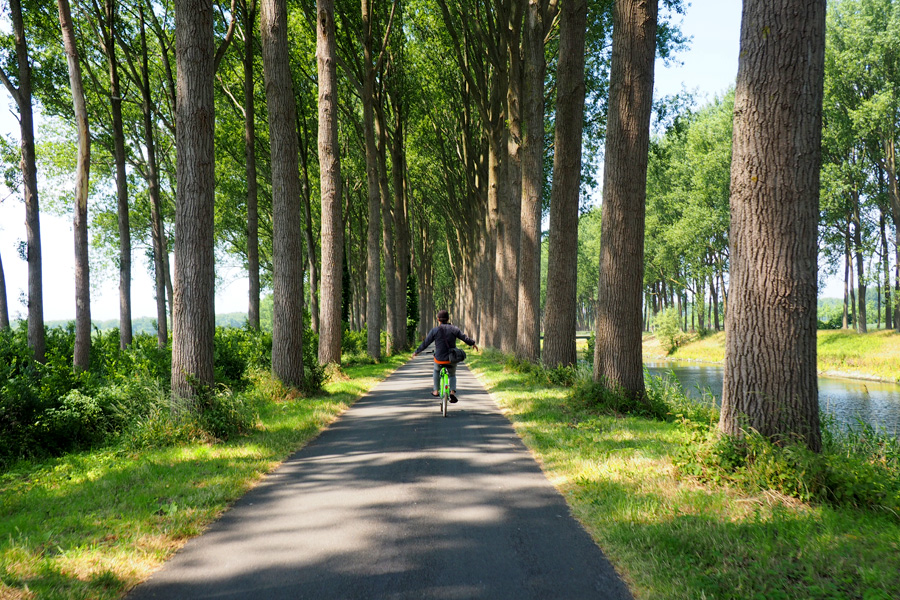 Tree Tunnel with bike lane and Nik