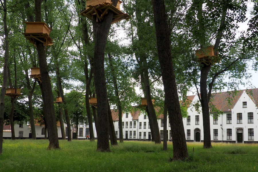 A monastery with tree houses