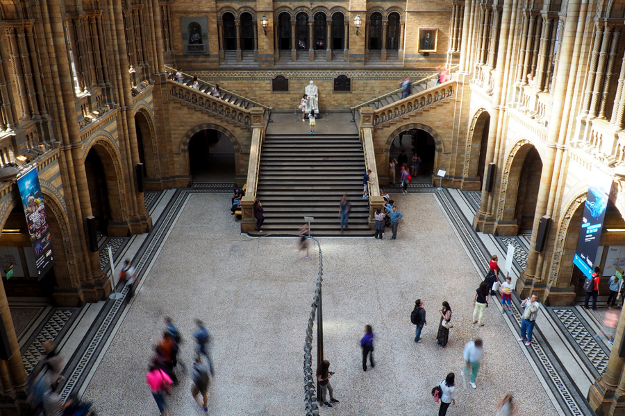 The epic main hall of the Natural History Museum